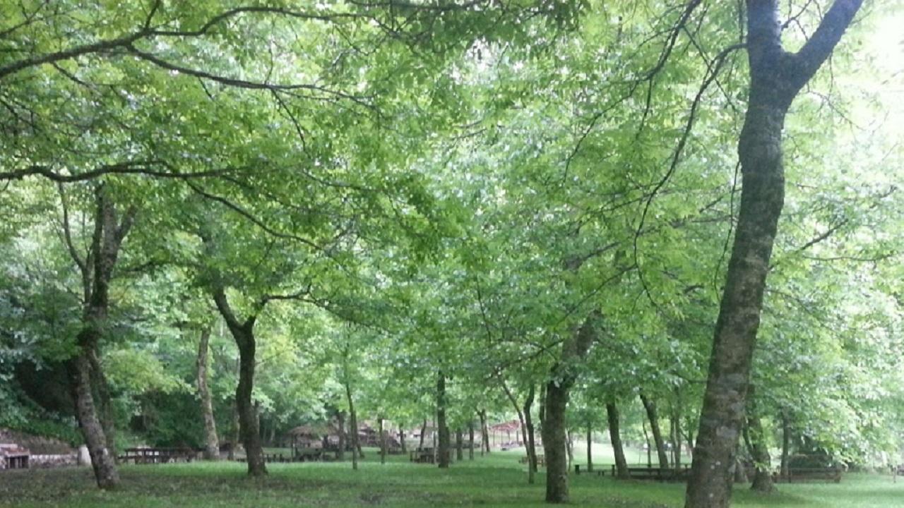 bosco acerno004